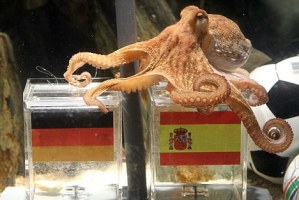 Paul The Psychic Octopus Earns Half A Million Pound For World Cup Punters