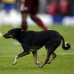 Dog Invades Pitch During Brazil v Venezuela – Video